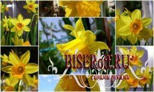 Нарциссы из лотков для яиц